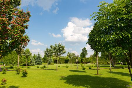 wide open spaces: Beautiful green summer park against clear sky