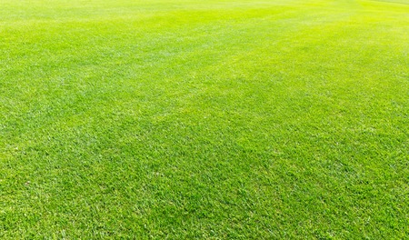 grass beautiful: Beautiful green grass meadow. Background or texture