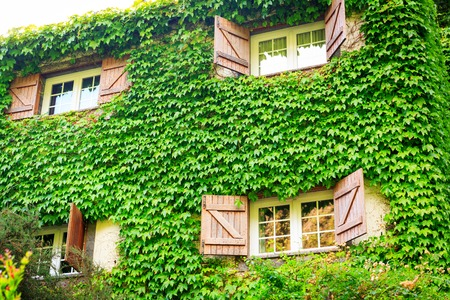 open windows: Two-storied house with open windows overgrown with ivy, Portugal, Madeira Stock Photo