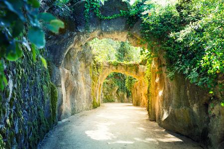 piso piedra: Hermoso camino con rocas cubiertas de musgo en el bosque Foto de archivo