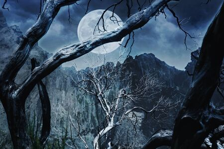 horrible: Horrible forest at night in the mountain