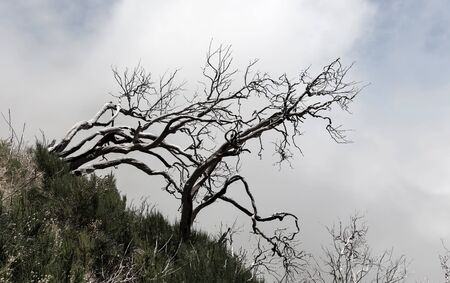 arboles secos: montañas oscuras con árboles muertos, Madeira Foto de archivo