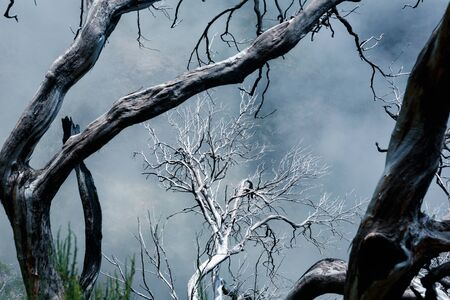 dead trees: Dry dead trees in foggy mountains. Toned Stock Photo