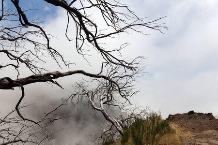 arboles secos: árboles muertos secos en la niebla