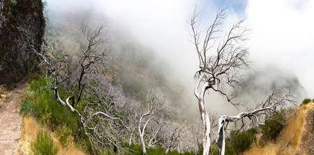 arboles secos: montañas oscuras con árboles muertos, Portugal, Madeira