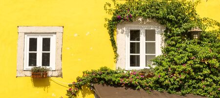 portugal: Two windows covered with ivy close up, Portugal Stock Photo