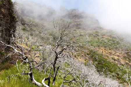 arboles secos: �rboles muertos secos en las monta�as de niebla