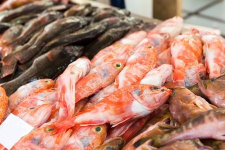 cartilaginous: Big heap of fresh cartilaginous fish on the market