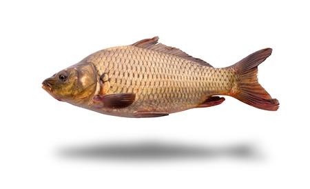 fish isolated: Fresh raw fish isolated on white background