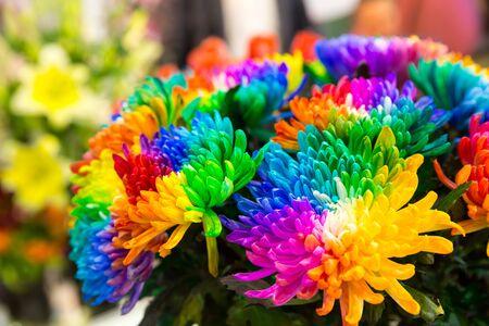 marguerites: Bright multicolored marguerites close up