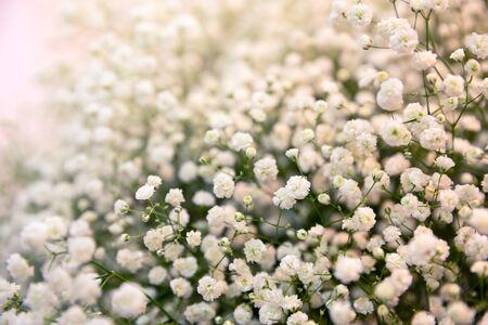 bush to grow up: Bush with white little flowers close up