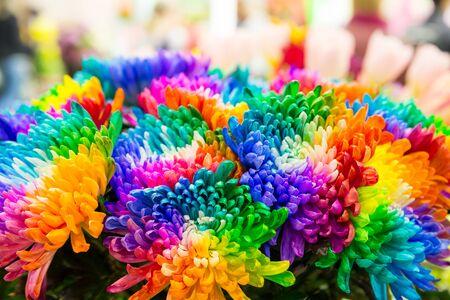 multicolored: Bright multicolored marguerites close up