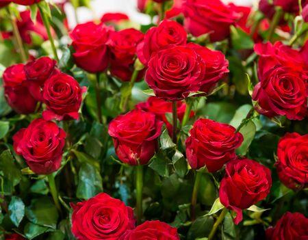 rosas rojas: Ramo de rosas rojas close up  Foto de archivo