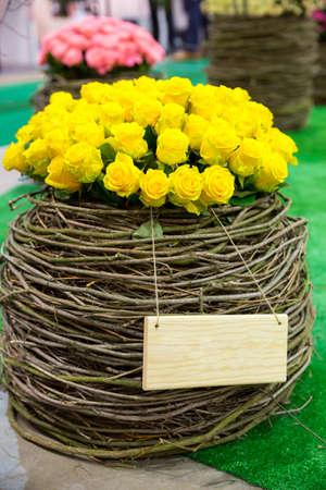 rose garden: Yellow roses rounded in flower pot