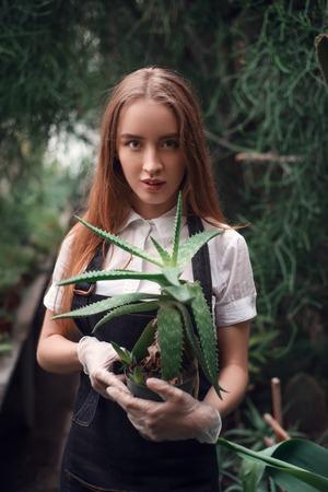 plant in pot: Gardener holding succulent plant in hands.