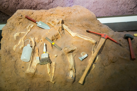 Skeleton and archaeological tools around. Stock Photo