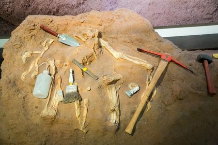 Skeleton and archaeological tools around. Archivio Fotografico