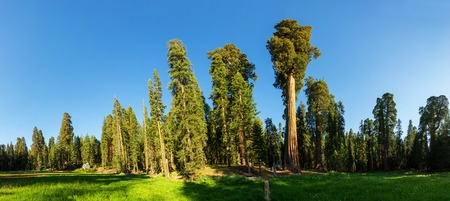 sierra: Meadow against huge pine forest panoramic view Stock Photo
