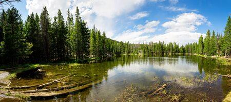 rocky mountain national park: Flora and fauna of Rocky Mountain National Park Stock Photo