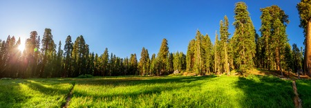 sierra nevada: Meadow against huge pine forest panoramic view Stock Photo