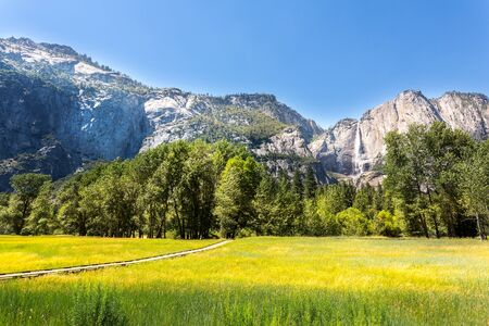 Meadow with green grass in Yosemite National Park
