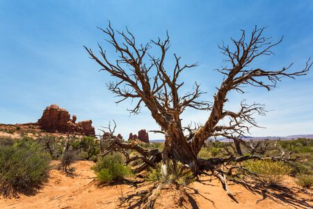 dry stone: Dry tree in desert valley. Stock Photo