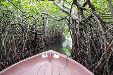 River, tropical mangroves Ceylon, view from boat