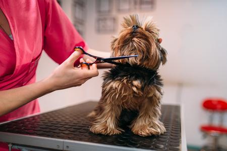 애완 동물 groomer는 개를 손질하게합니다