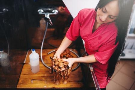 groomer: Pet grooming, dog washing in groomer salon