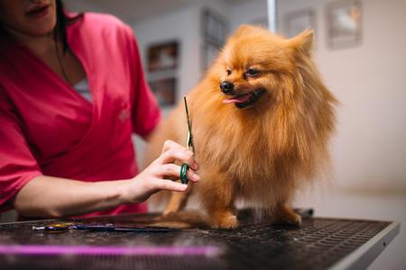 groomer: Pet groomer makes grooming dog