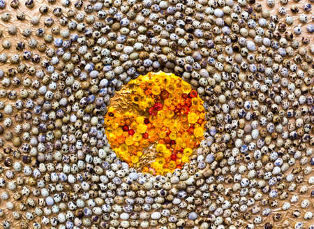 huevos de codorniz: Quail eggs and orange flowers, closeup, top view Foto de archivo