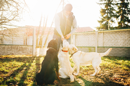 Cynologist works with cop dogs, training outside