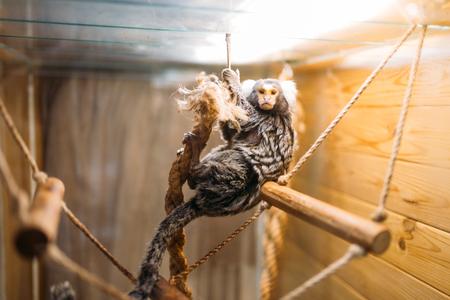 Exotic domestic animal, pet shop Stock Photo