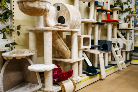 Inside zooshop, shelves with accessories for cats