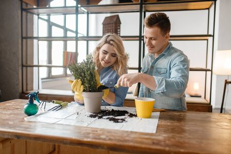Young couple changes the soil in home plants