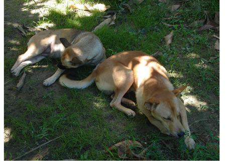 brethren: my dog  kheue & Zaa