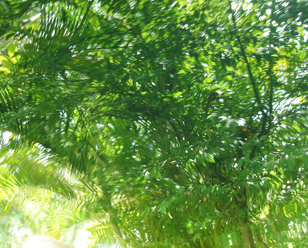 oscillate: camouflage Stock Photo