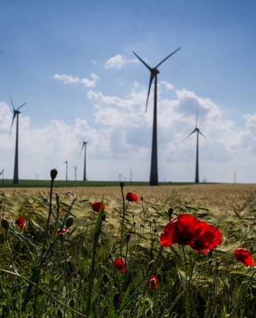 windmills and poppies photo
