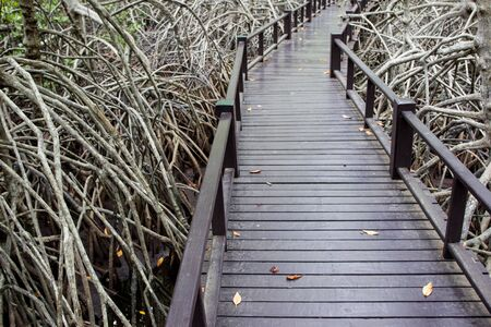walk path: Wooden walk path in mangrove. Stock Photo