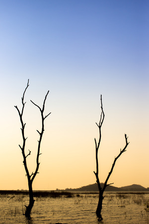 Branchs of a dead tree standed over the lake while the beautiful sunset sky background close up.