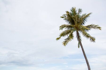 Photograph of hight coconut tree close up with the cloudy sky in background. Stock Photo