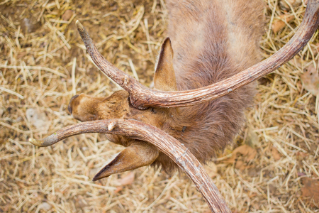 Beautiful deer's horn from above view close up. Stock Photo