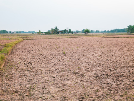 Dry land of old rice field after harvest season.