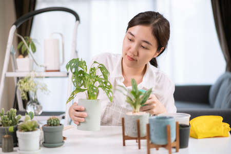 Cheerful happy Asian woman watering a small houseplant in the room close up, gently water a plants by using water spray. Asian happy girl enjoy planting and watering a cactus  and houseplant.