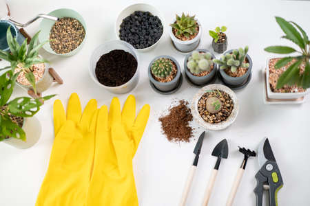 Houseplant equipments on the white table including rubber yellow gloves, cactus, monstera, and other tools. Small plant for decoration concept. A different types of houseplant and planting tools.