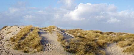 lyme: Dune with Lyme Grass at the Danish North-west Coast, Blokhus, Jutland
