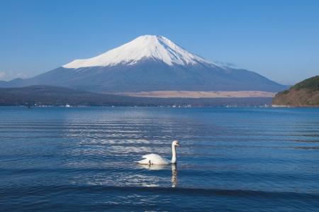 Fuji and White Swan