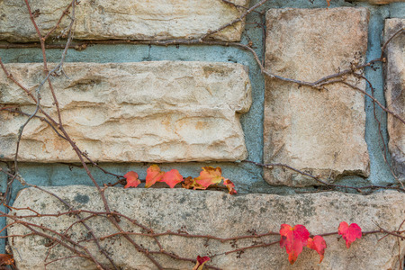 creeping plant: Old stone brick wall texture against creeping plant and grass. Stock Photo