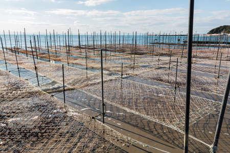 entrap: Net and wooden pole for entrap algae in sea.