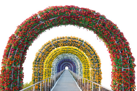 ornamental garden: floral arch and walkway isolated on white background.Object with clipping path.